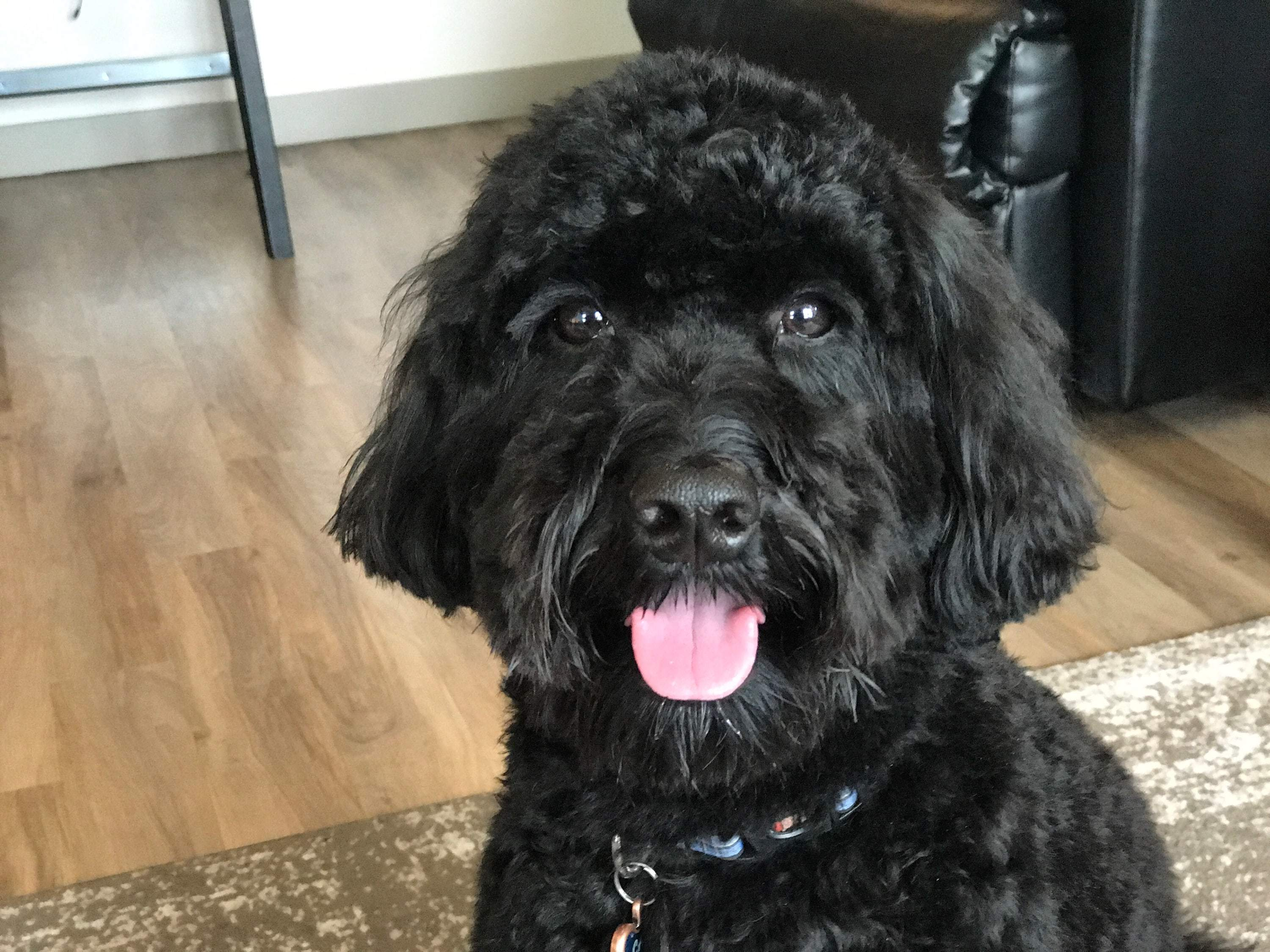 my dog carl happy after eating his ziwipeak dog food