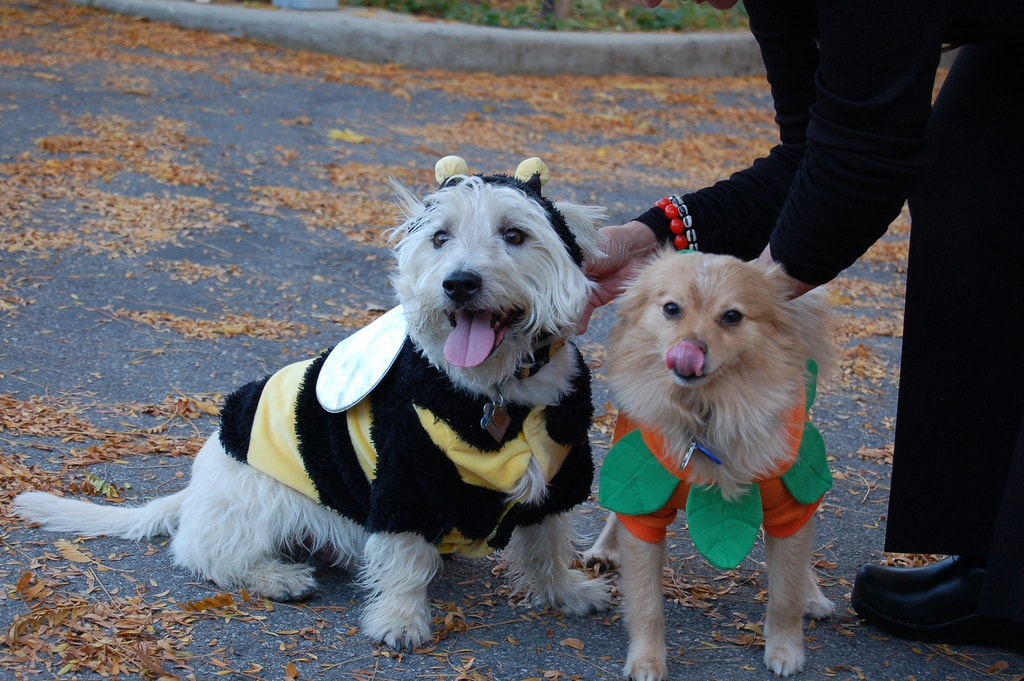 Quick and Unique Halloween Costumes for Your Dog
