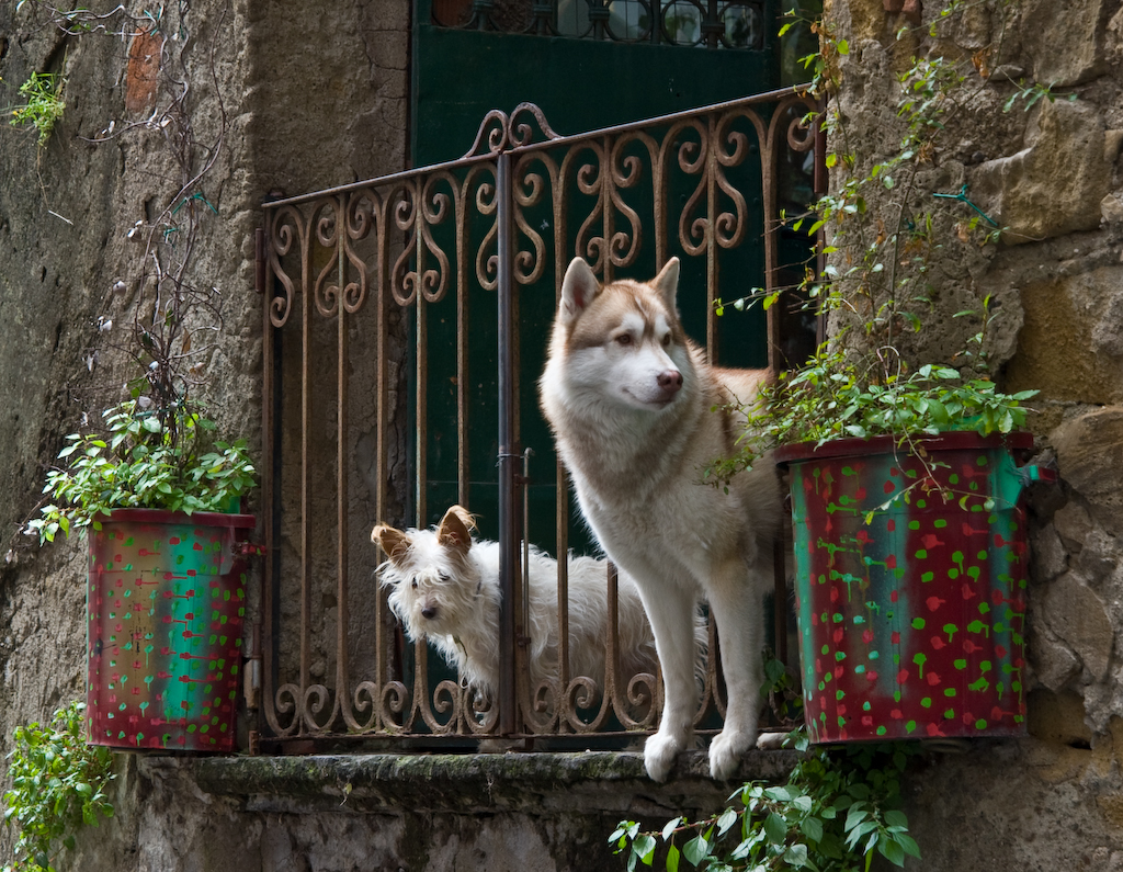 two dogs looking off a balcony