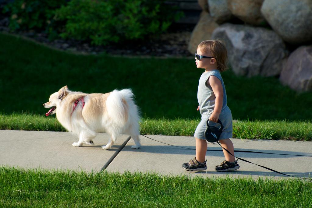 child walking dog on sidewalk