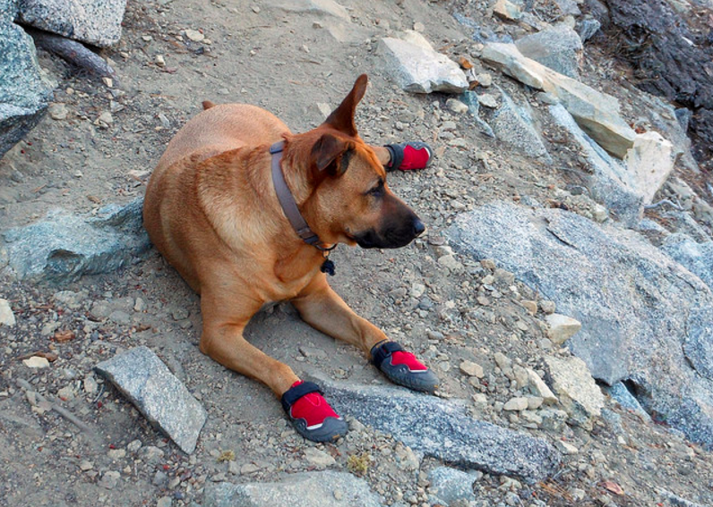 The best dog boots for summer and hot weather
