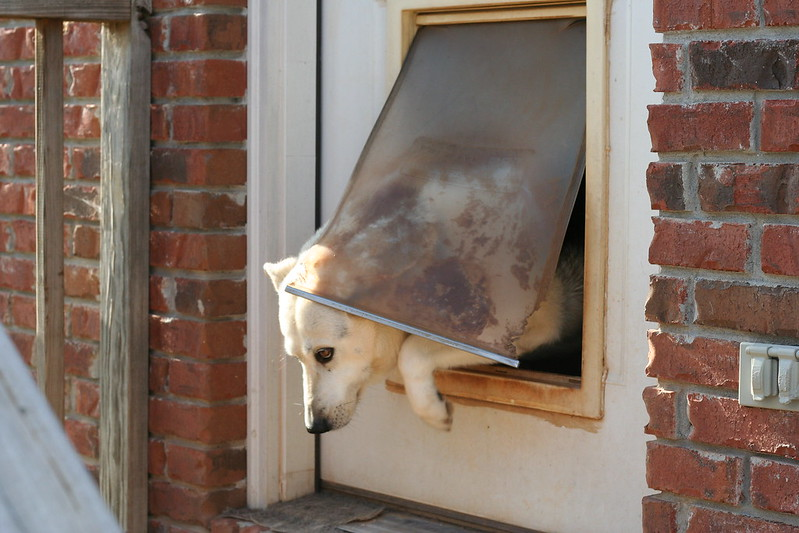 The ultimate guide to the best dog doors