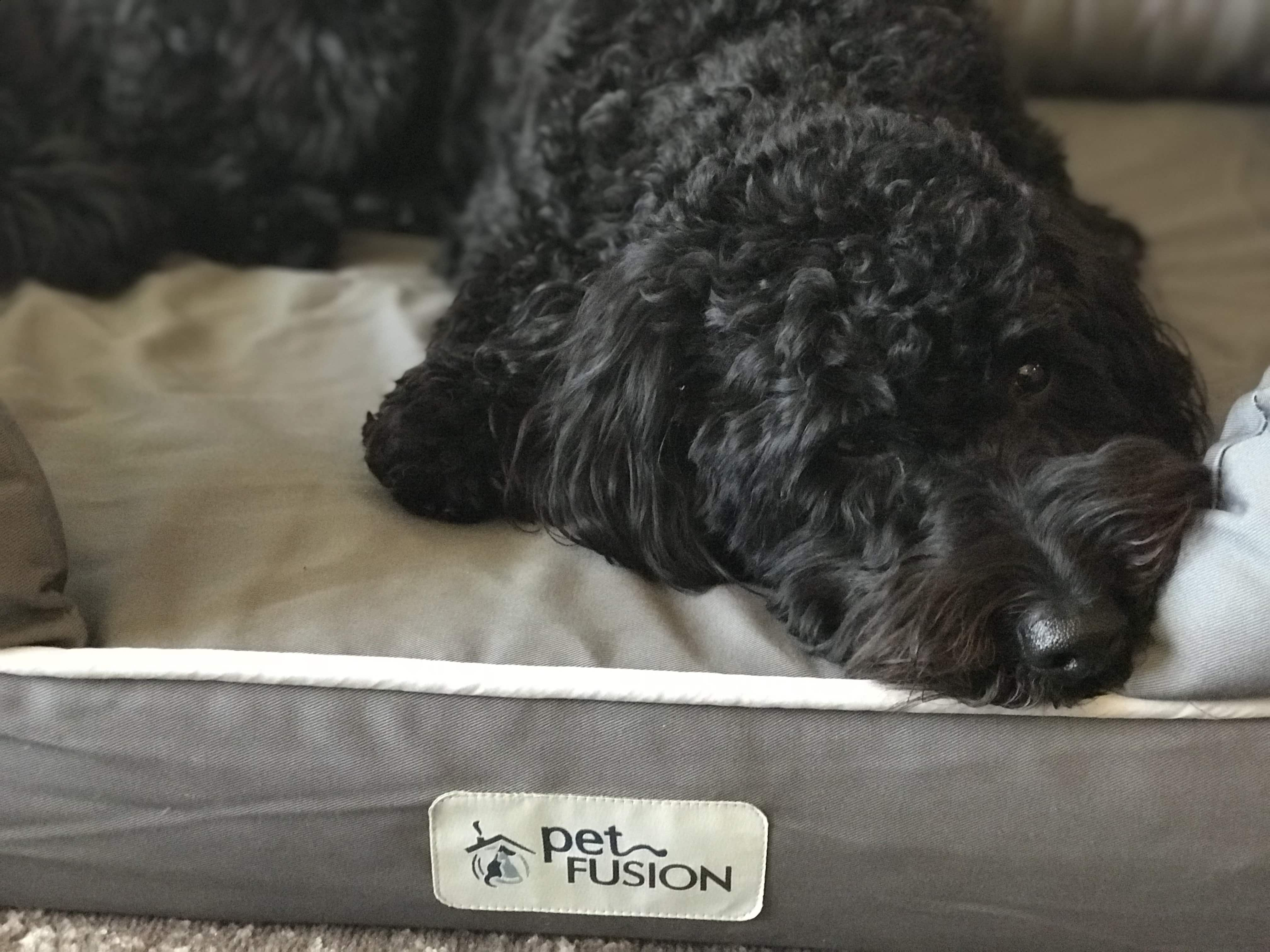 Petfusion Ultimate Dog Bed Review: Best Dog Bed Ever?
