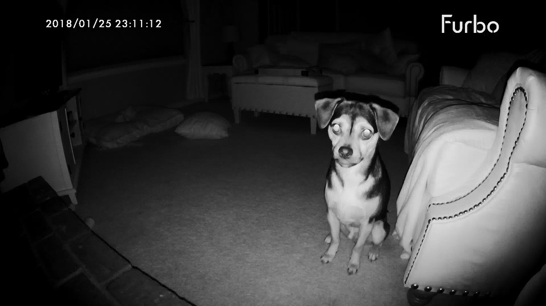 night time picture taken from furbo pet monitor of pup