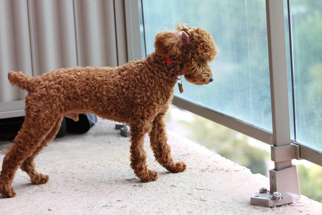 7 things you need to do to dog proof your balcony