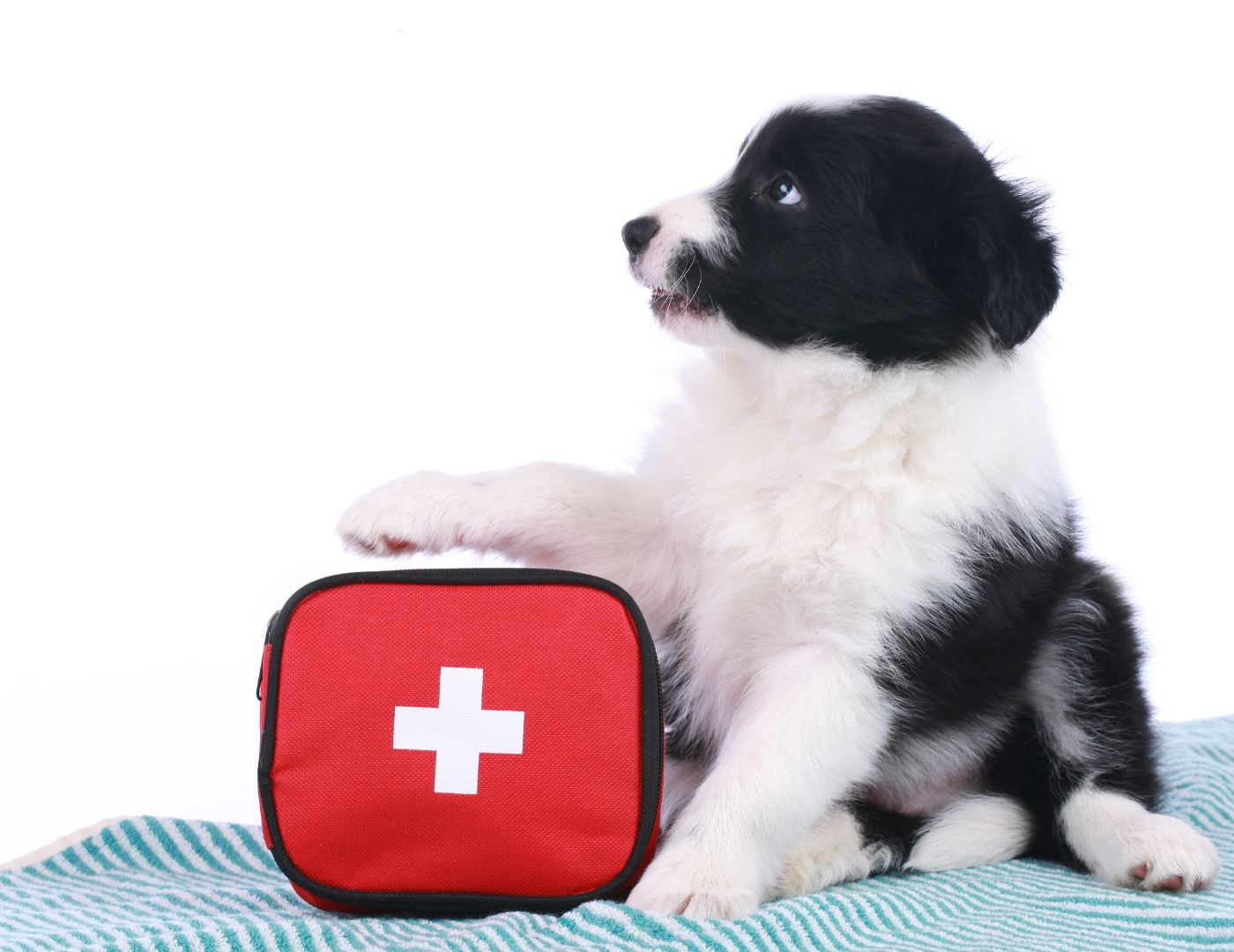 What you need to know about the best dog first aid kits
