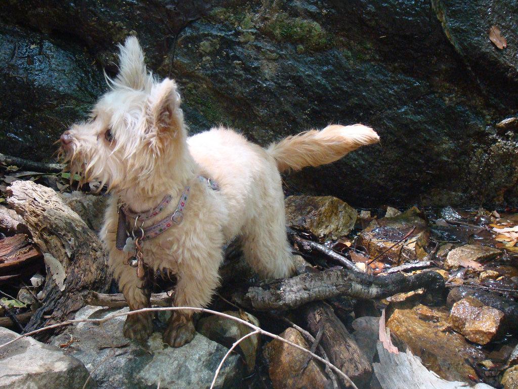 small dog on rocks