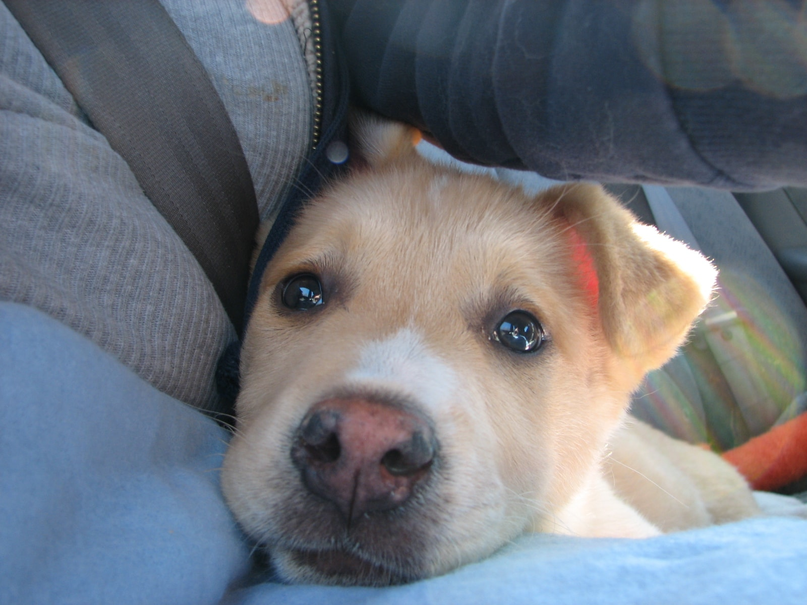 PuppyLife: Bringing Home a New Puppy