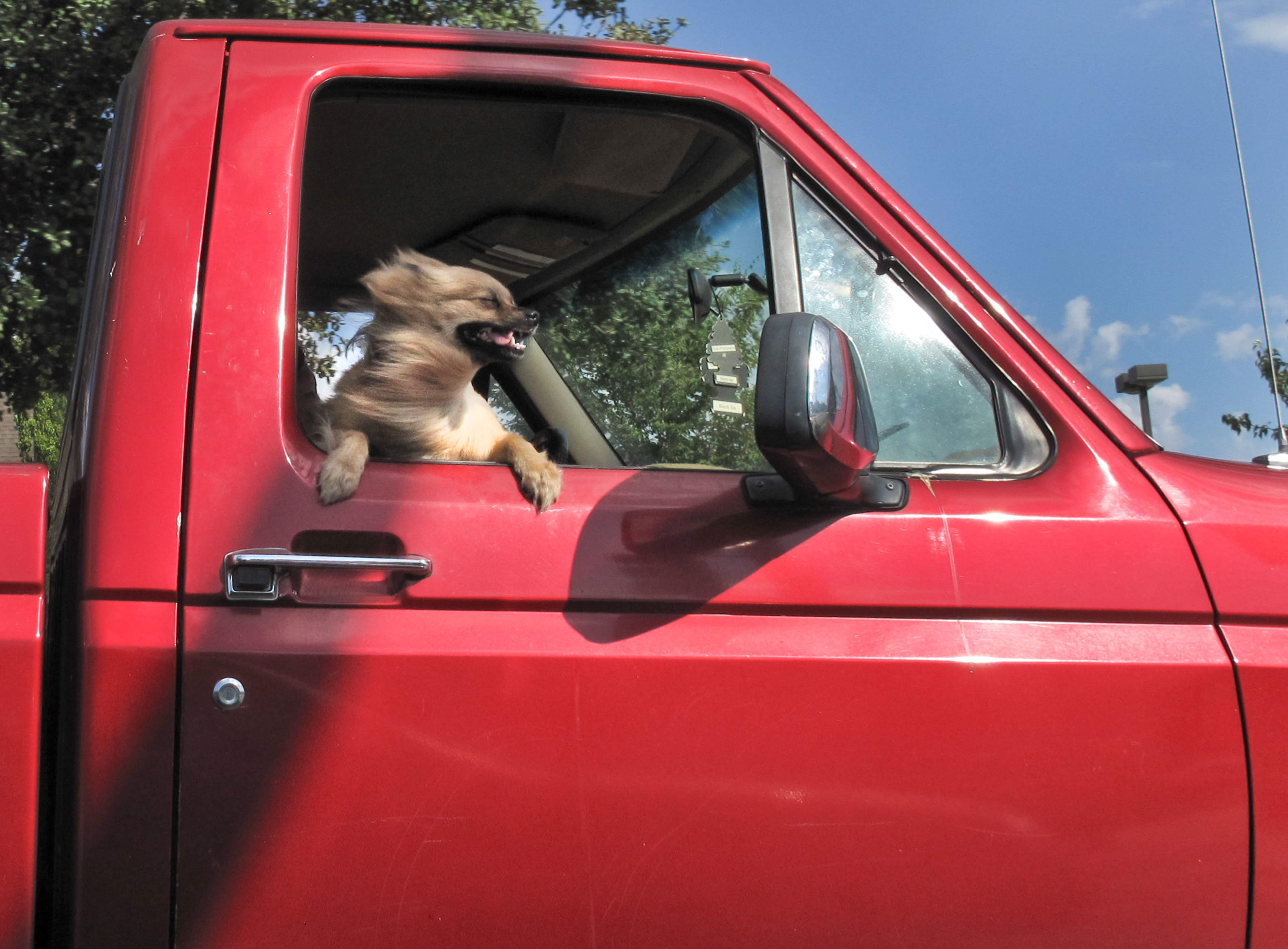 small dog riding in truck