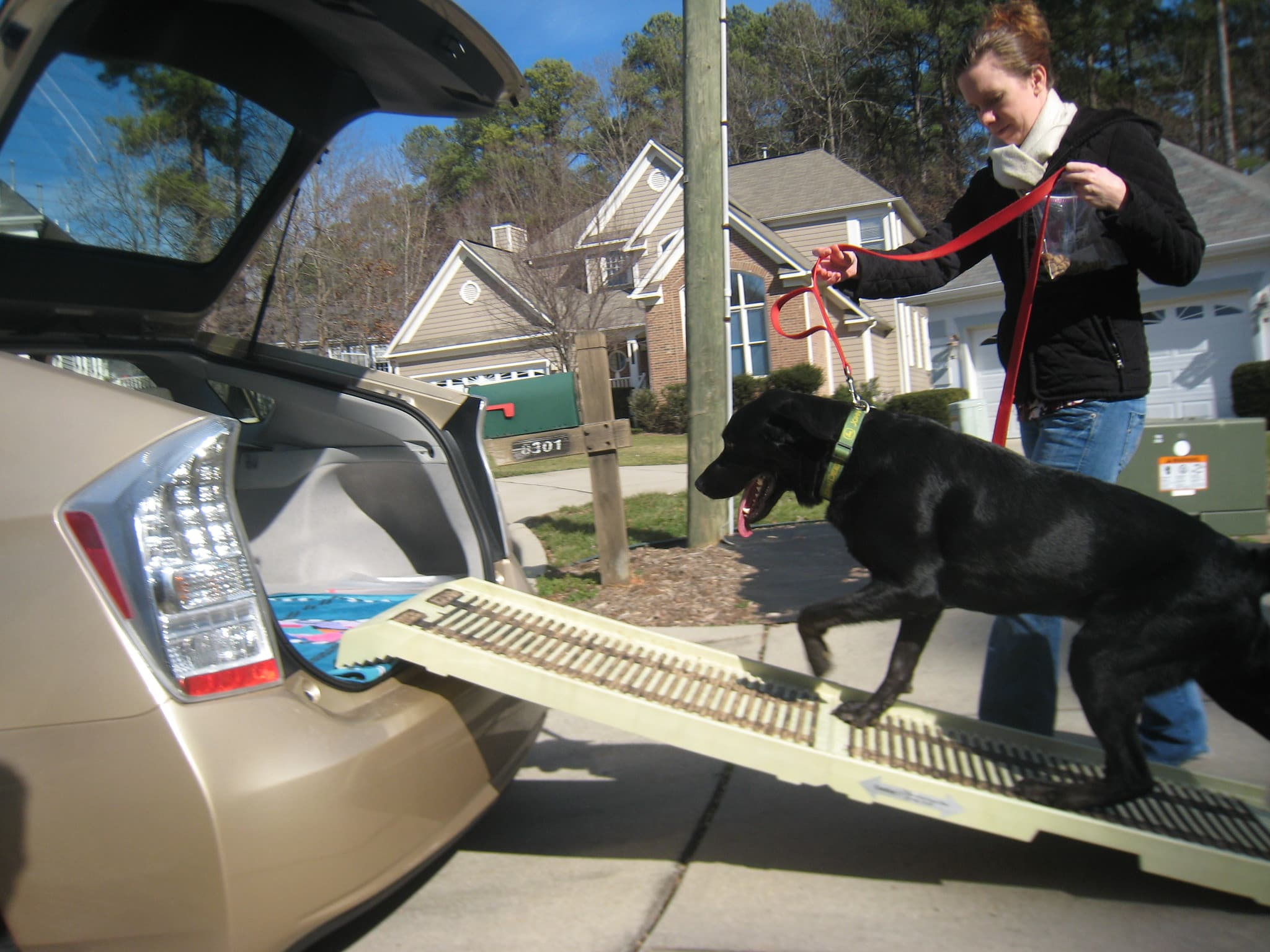 The best dog ramps for every situation