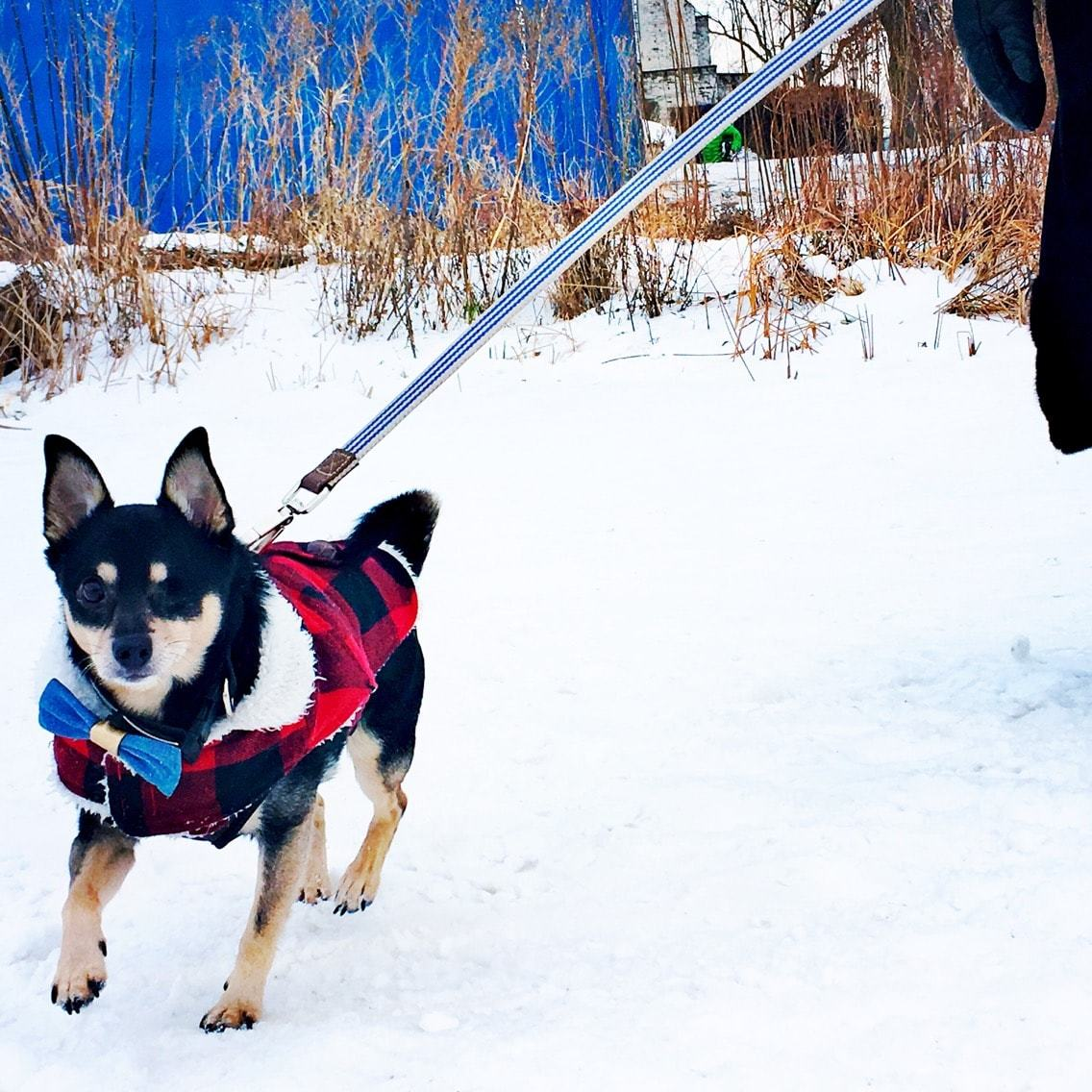 take your canine hiking for a fun activity during winter