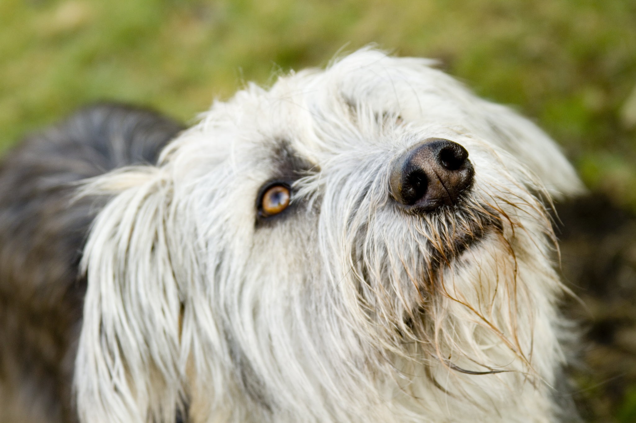 The ultimate guide to dog DNA tests: Benefits and the best test kit