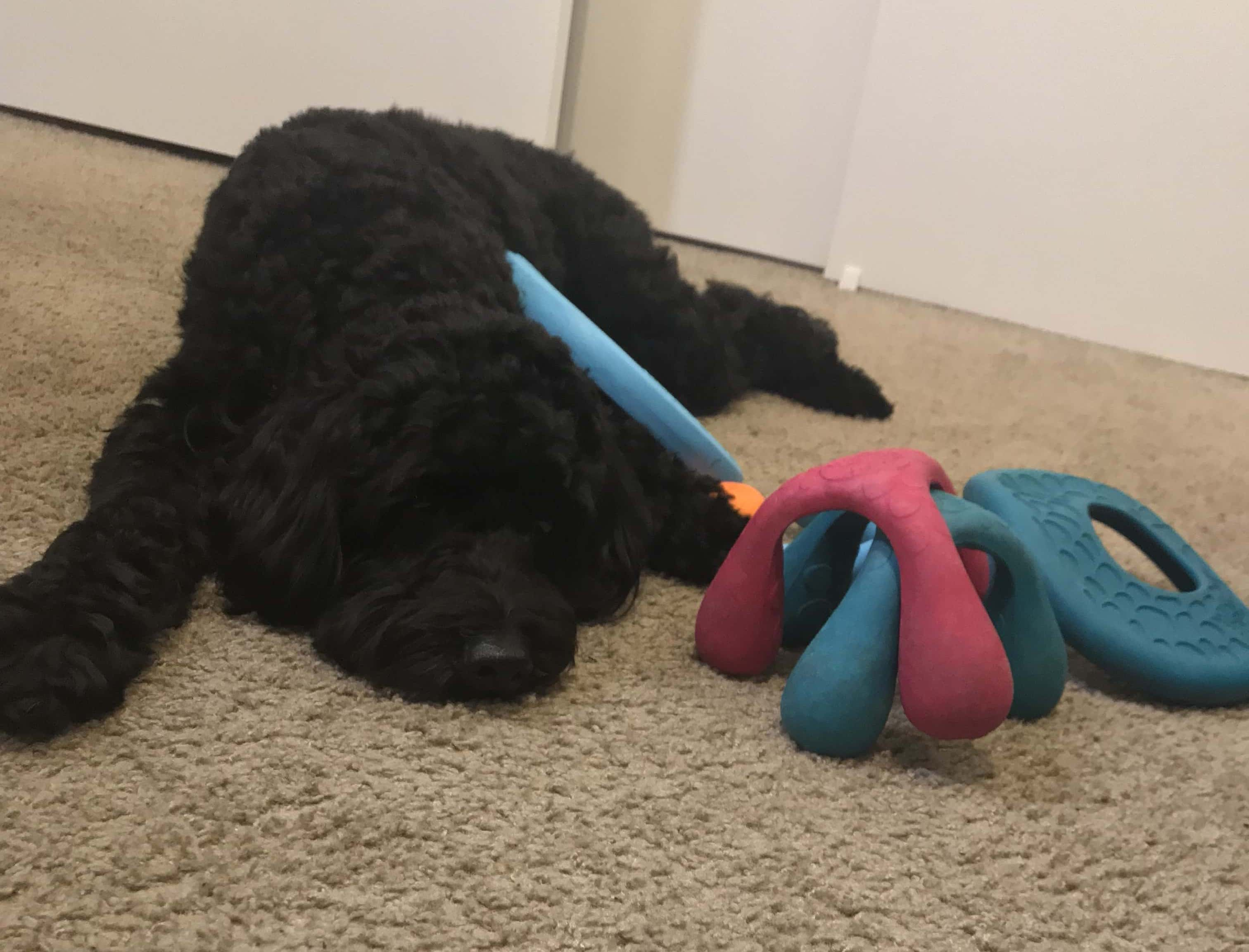 West Paw dog toy review: The best choice for active chewers