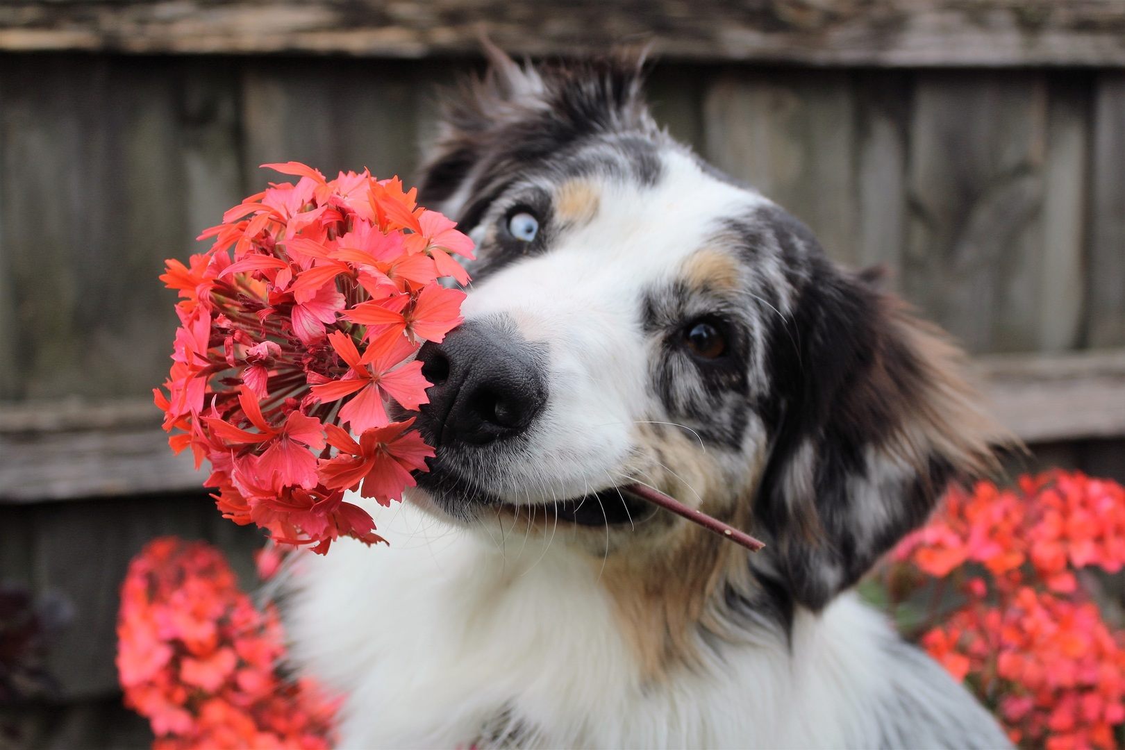 12 Household plants dog owners should avoid
