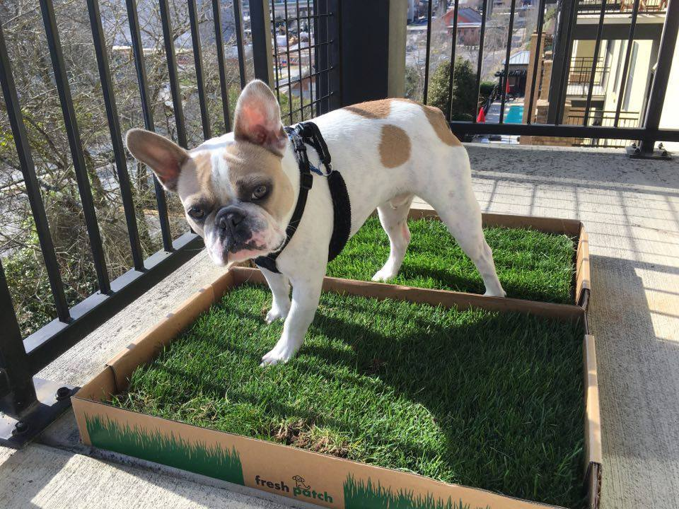 Which Type of Dog Grass Pad is Best for Your Balcony