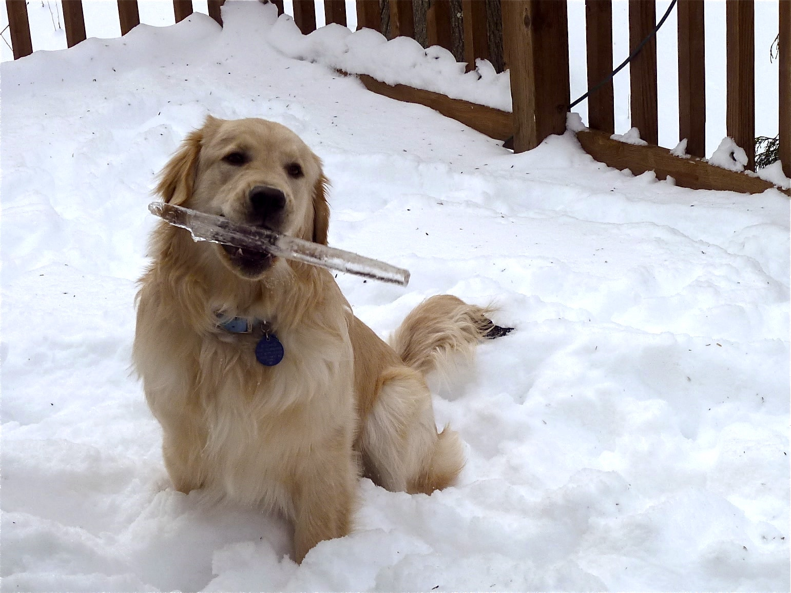 8 Fun and unique things to do with your dog in the winter