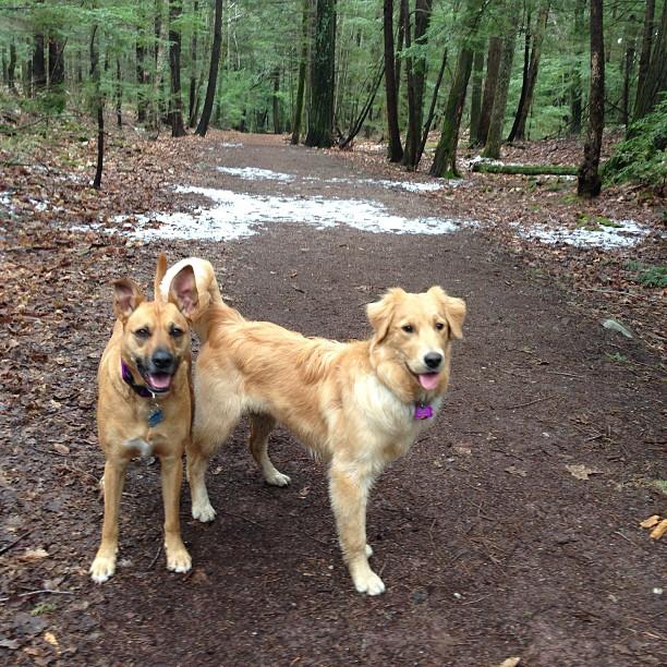 Dogs on walking trail