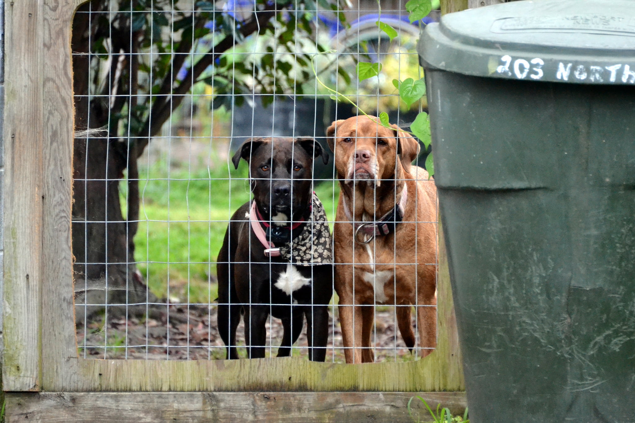 Do shock collars hurt dogs: The shocking truth