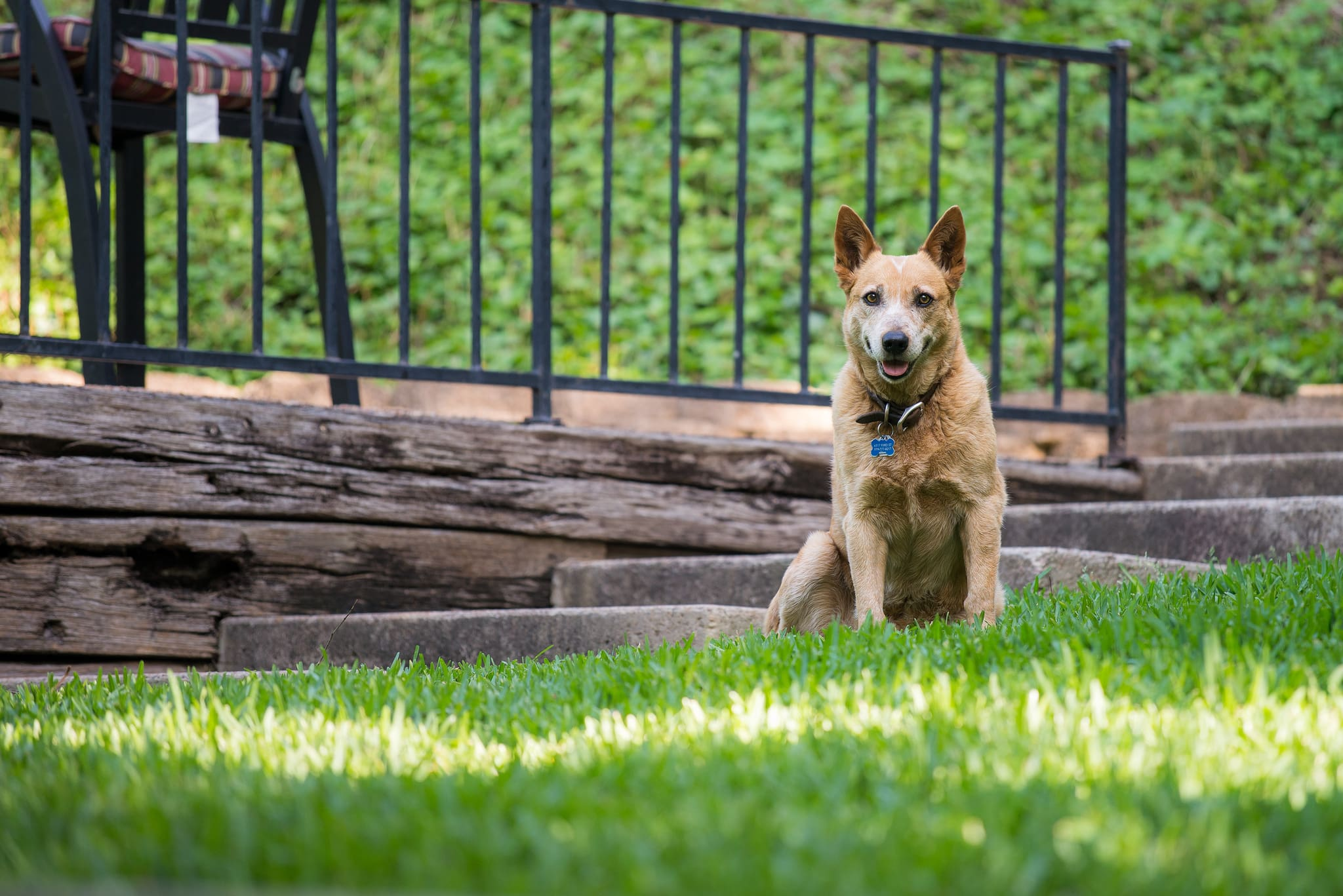 Stop barking now: The 3 best ultrasonic bark control devices