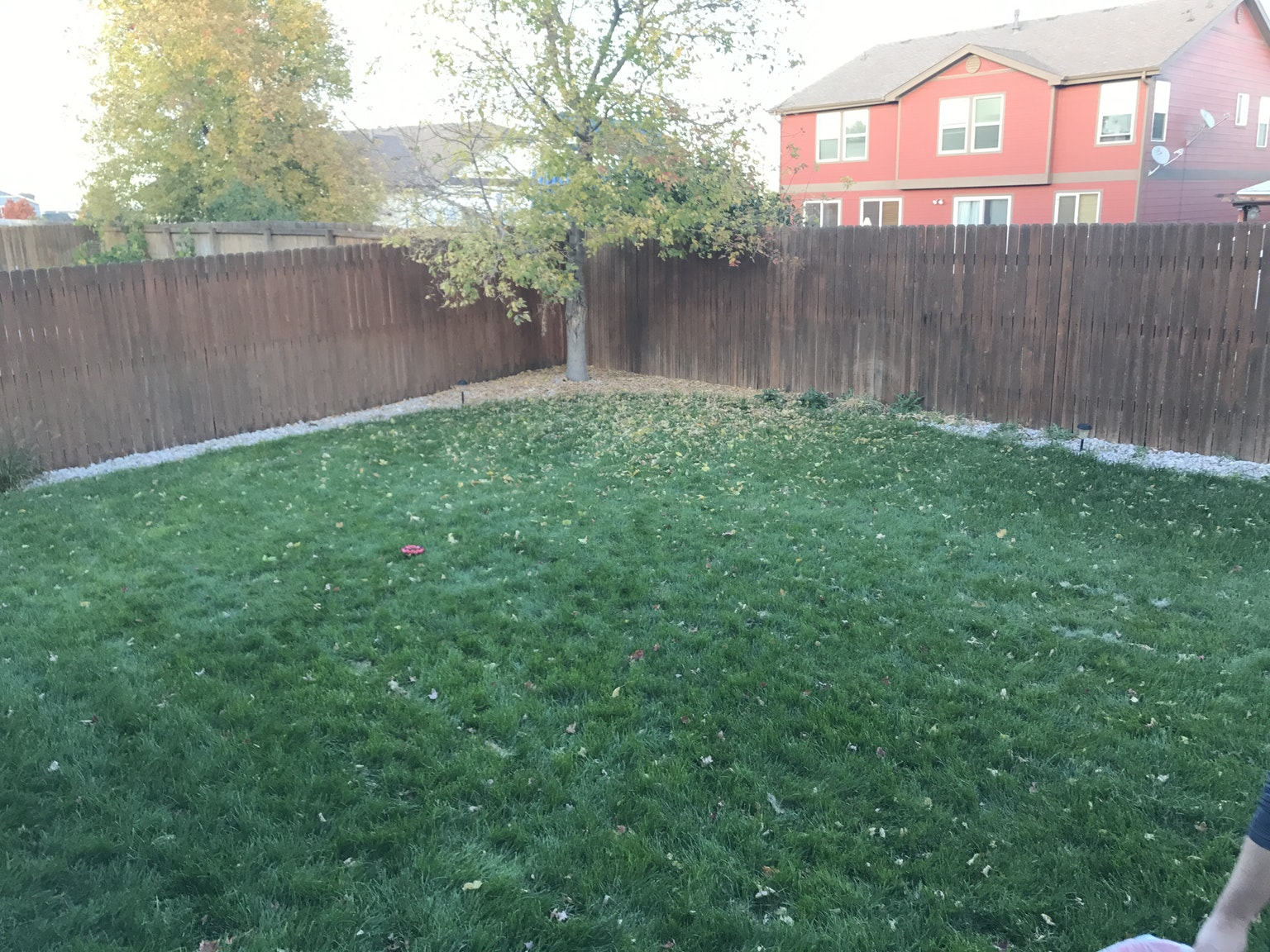 backyard area for dogs to play at a dog sitters house