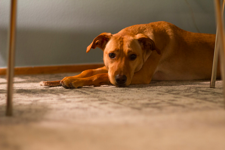 What to do if your dog has ringworm
