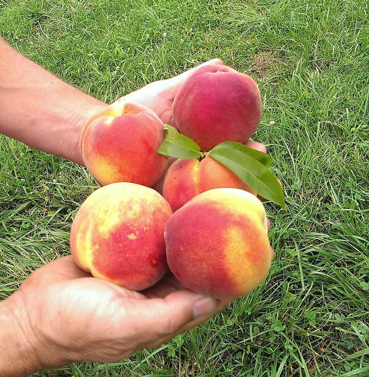 Dickie Brothers Orchard image