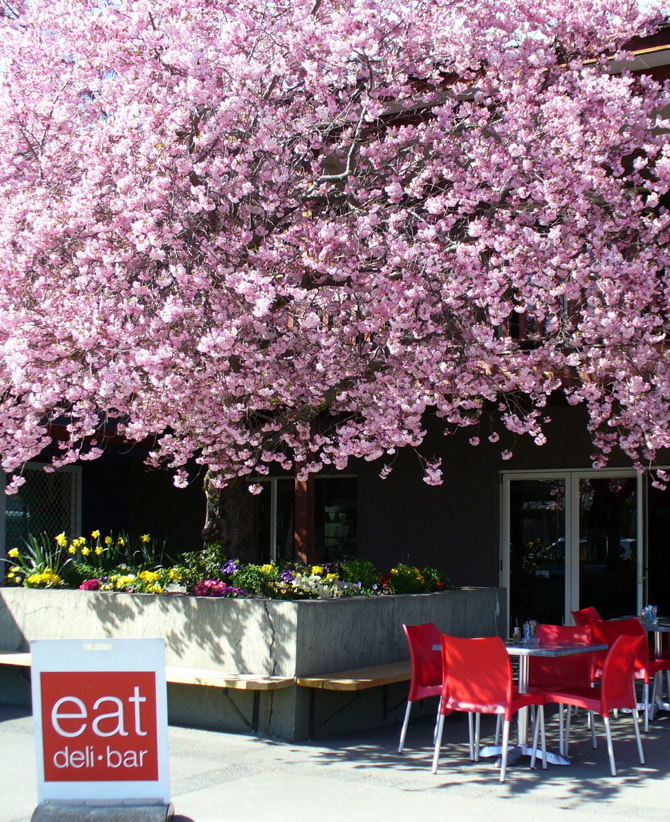 Picture of eat deli & bar