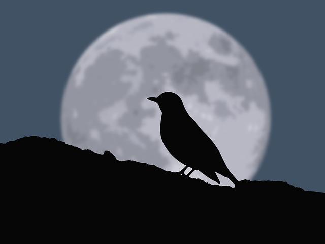 raven-wolf