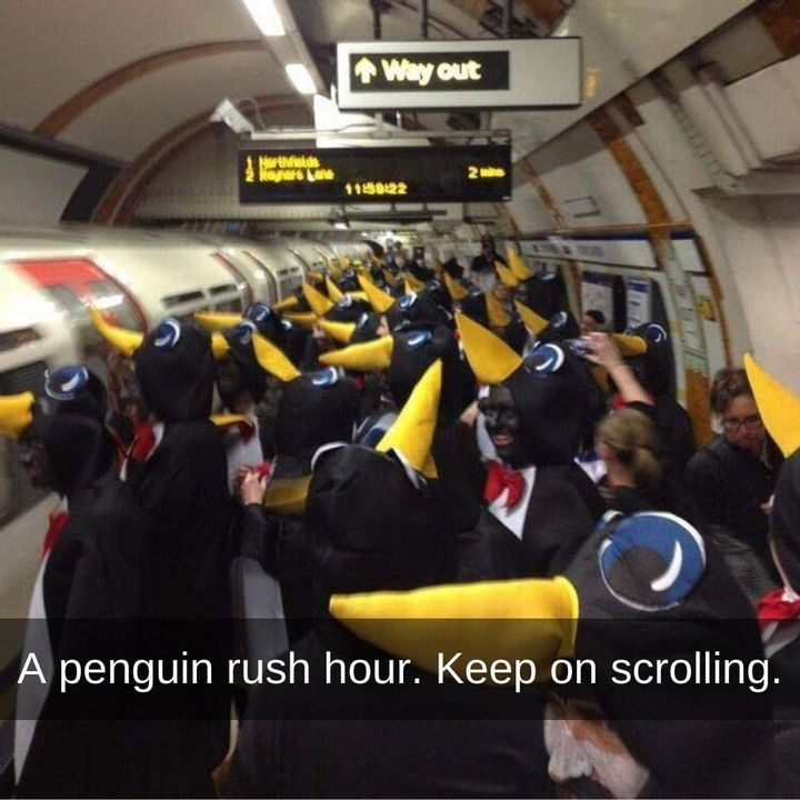penguin-rush-hour