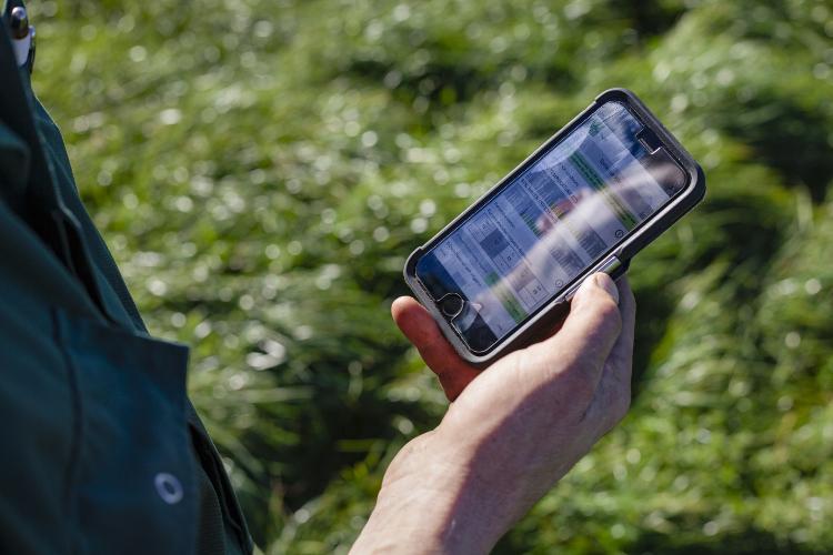 Regen mobile app being used out in a field