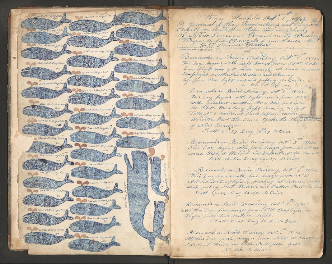 illustrations of whales from a 19th-century logbook