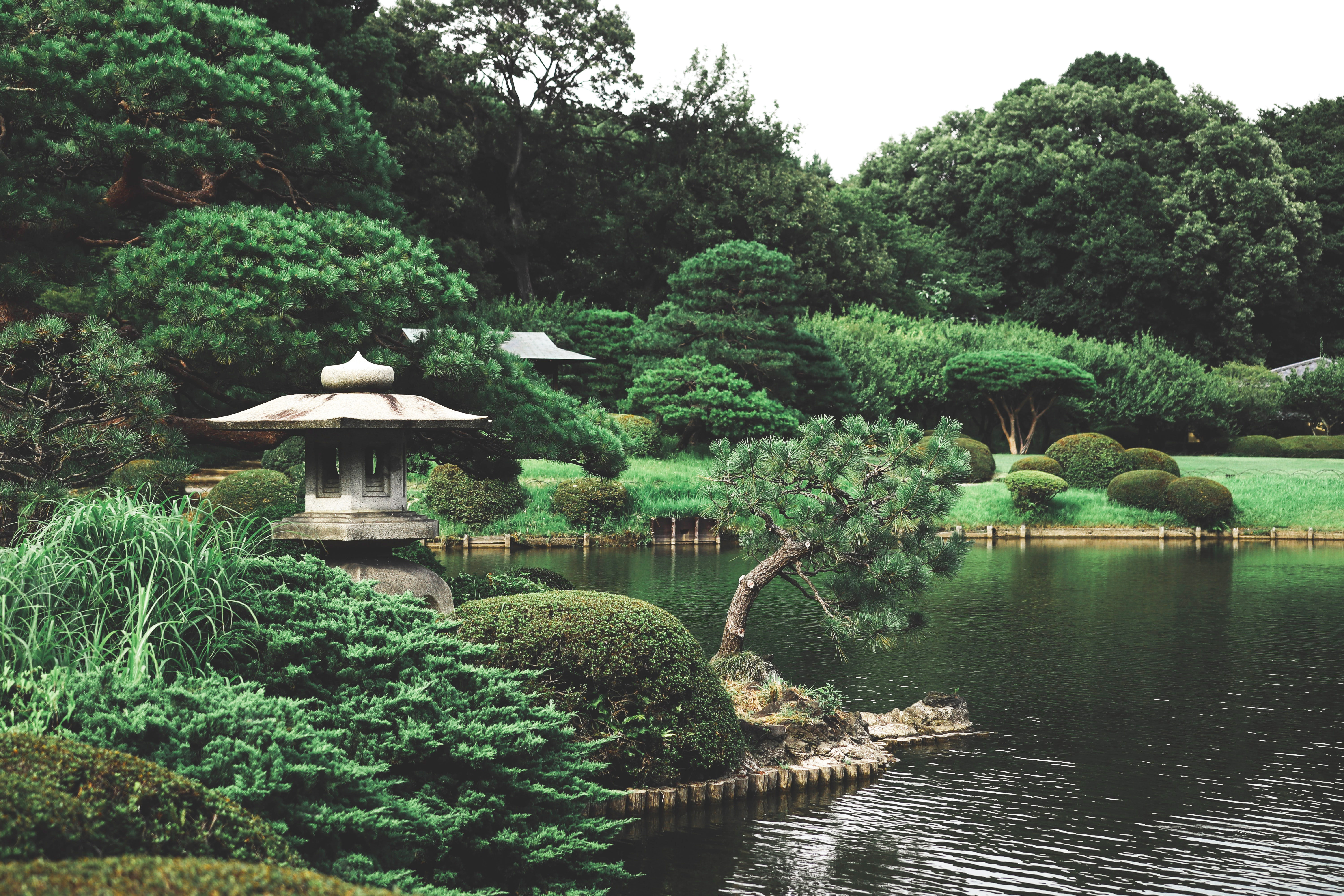 green japanese garden with pond