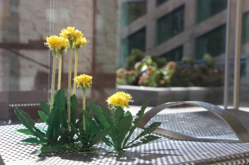 paper dandelions in an art exhibit