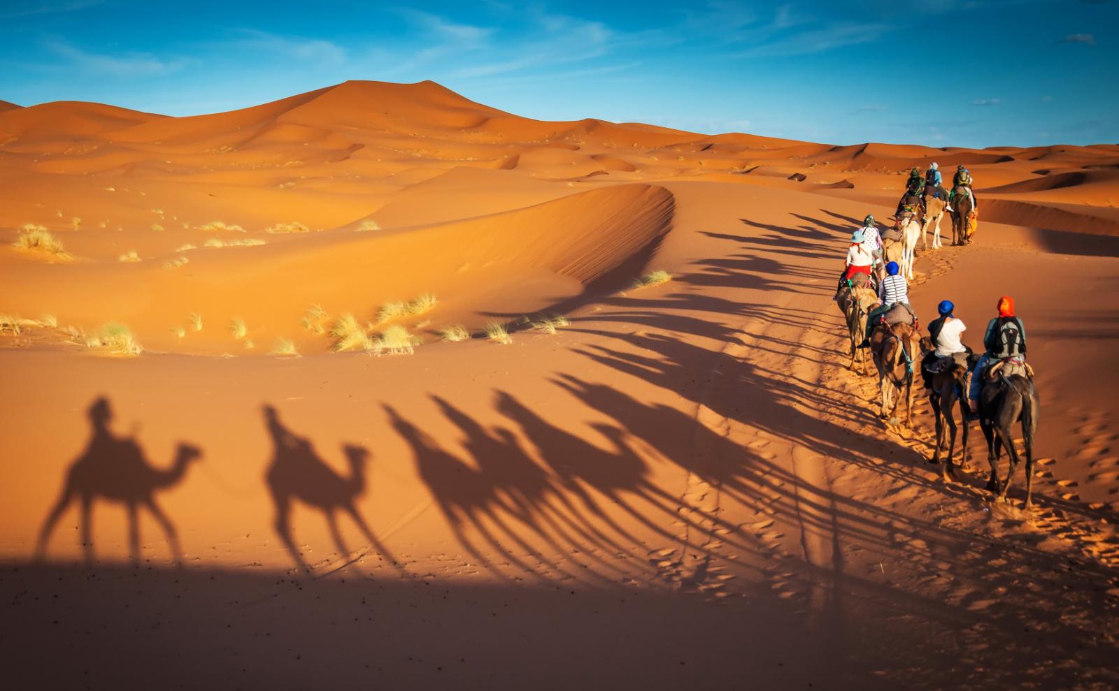 a line of camels walks across the desert