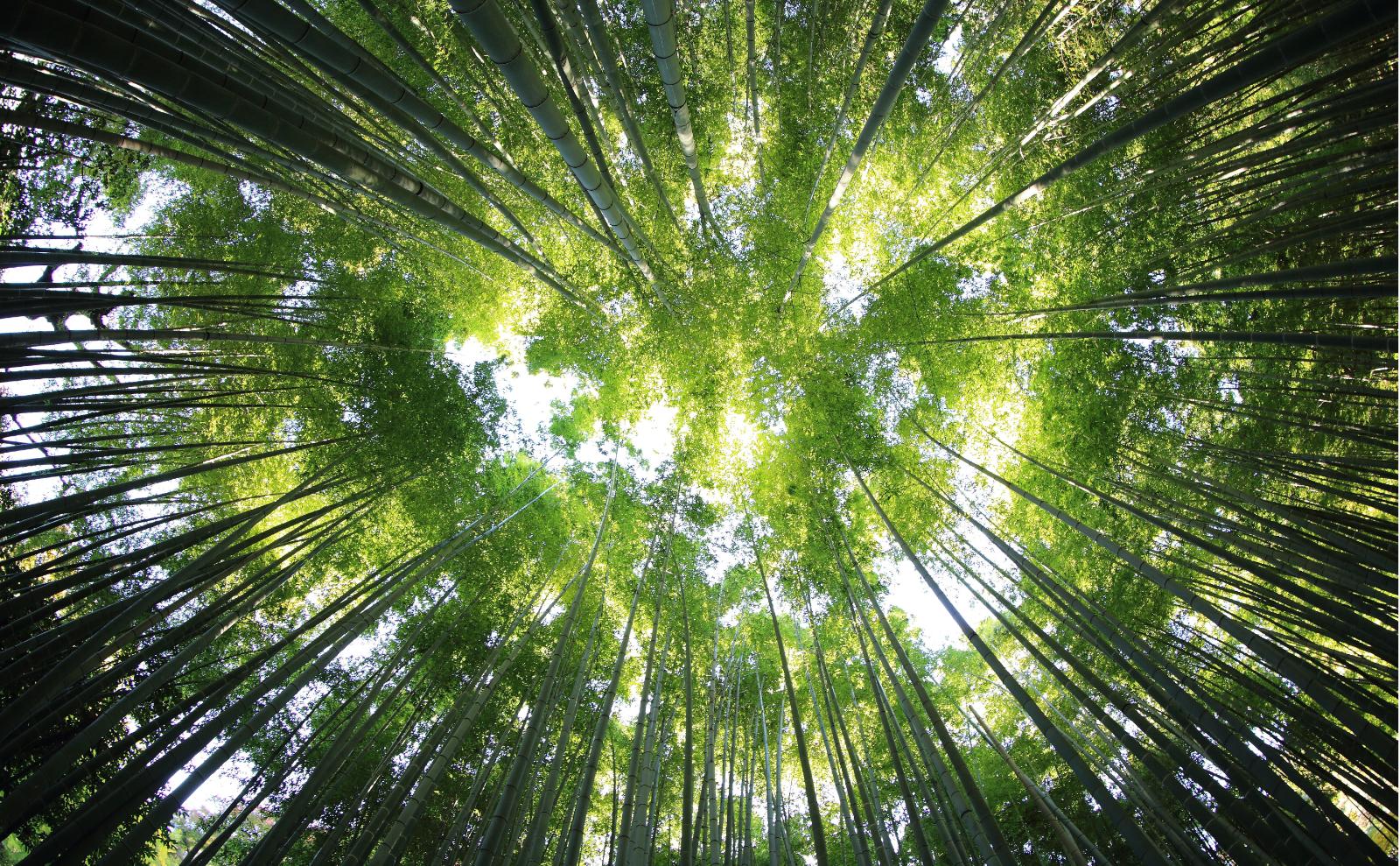 green trees soaring overhead