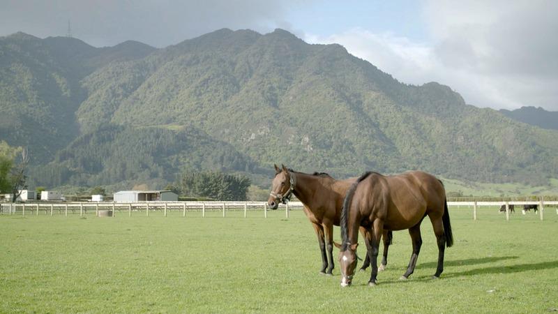 Mount Te Aroha