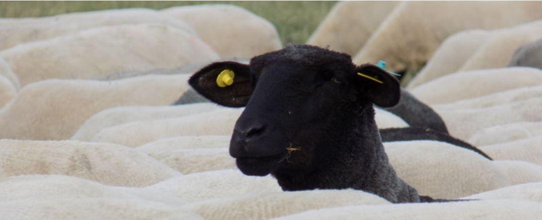 Wir führe ich schwarze Schafe? - 3 Tipps