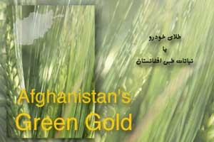 کتاب نباتات طبی افغانستان