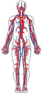 جریان خون در بدن انسان