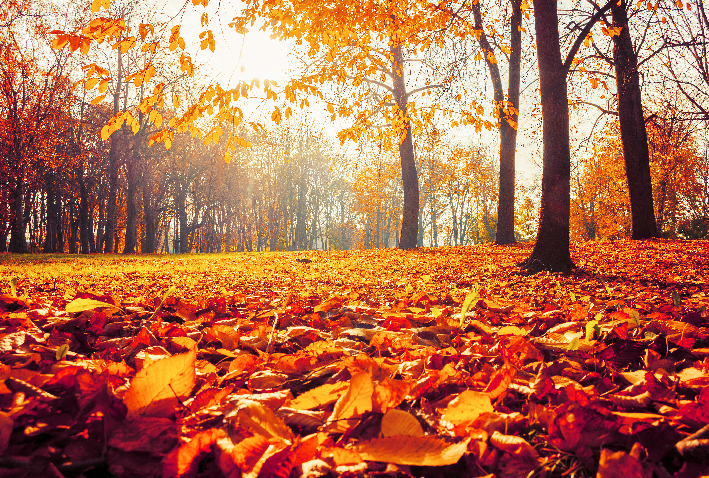 Did You Know These Facts About Fall?