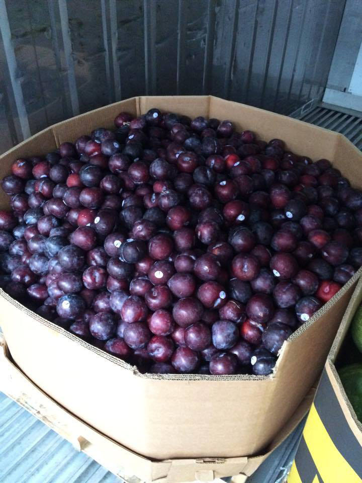 Plums that didn't meet supermarket cosmetic standards