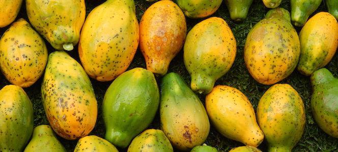 Papaya Waste: The Fuel of Hawaii