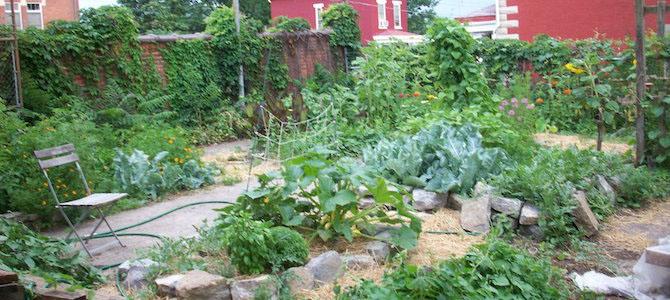 How to Start a Shared Garden