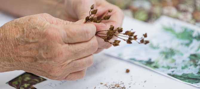 Seed Sharing in the Age of Climate Change
