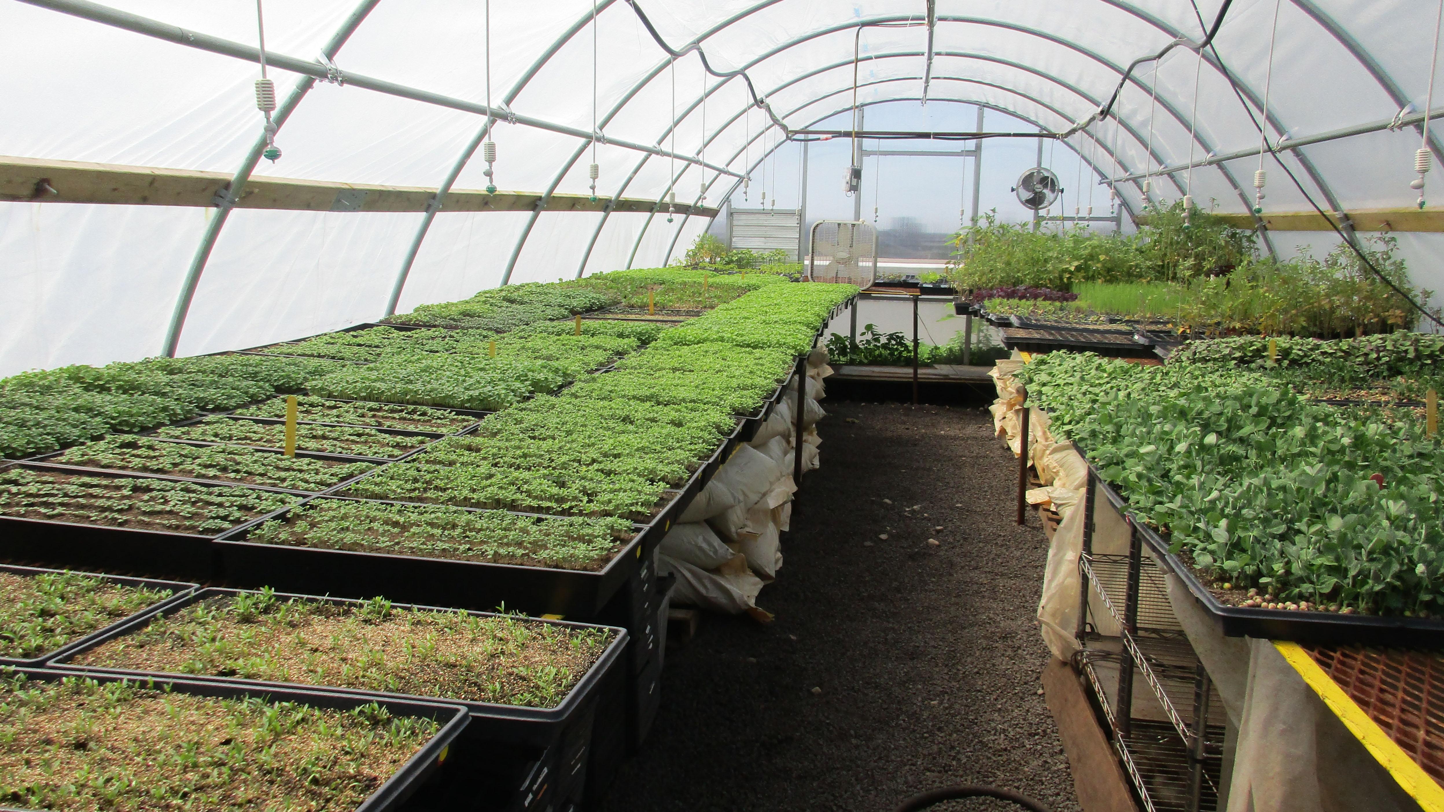 Greenhouse at Brooklyn Grange