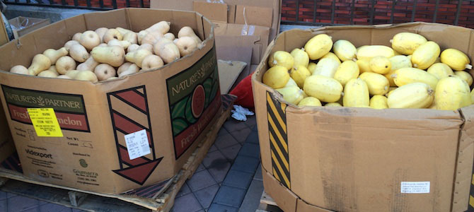 Recovered squash for Feeding the 5000: Oakland