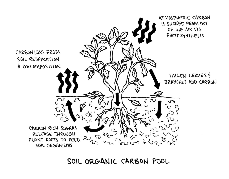 Soil + Oranics + Carbon