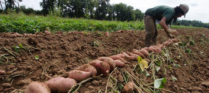 Fair Food Fund: Closing the Farm-to-Table Gap