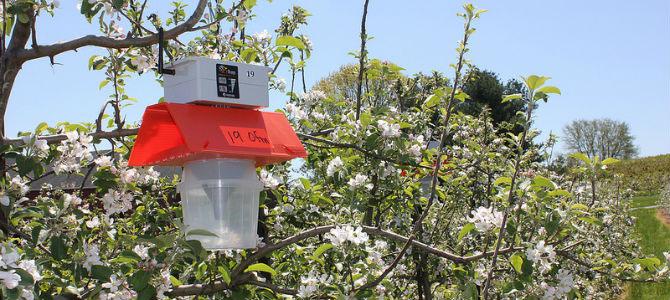 Ag Innovations: Robotic Bug Trackers