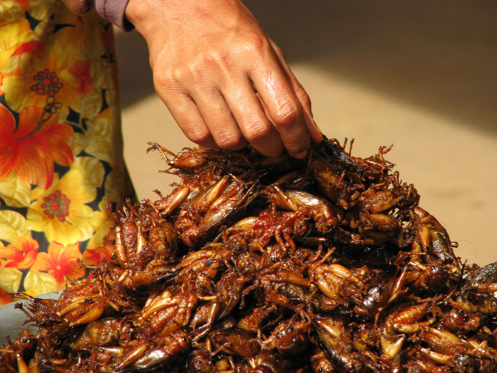 Will Insects Save Our Food Supply?